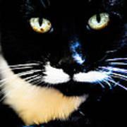 Cats Eyes Art Print