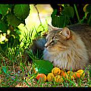 Cat's Mountain Summer Print by Susanne Still