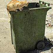 Cats On And In Garbage Container Art Print