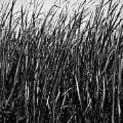 Cattail Reed Background Art Print