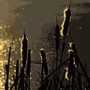 Cattails At Sunset Art Print