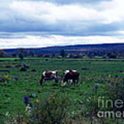 Cattle At Pasture Art Print