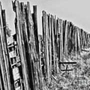 Cattle Fence By Diana Sainz Art Print