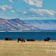 Cattle Grazing At Hawea Lake In Southern Alps In New Zealand Art Print
