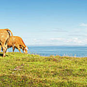 Cattle Grazing In Picturesque Meadow Art Print
