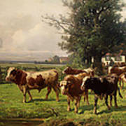 Cattle Heading To Pasture Art Print