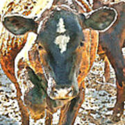 Cattle Round Up Art Print
