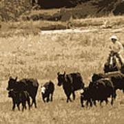 Cattle Round Up Sepia Art Print
