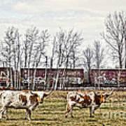 Cattle Train Art Print