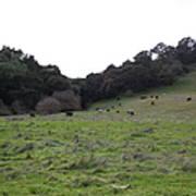 Cattles At Fernandez Ranch California - 5d21104 Art Print