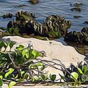 Causeway Shore Blues Art Print