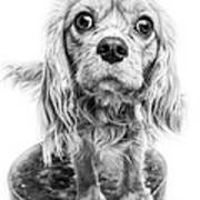 Cavalier King Charles Spaniel Puppy Dog Portrait Art Print