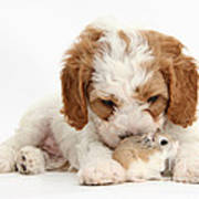 Cavapoo Puppy And Roborovski Hamster Art Print