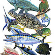Cayman Collage Art Print