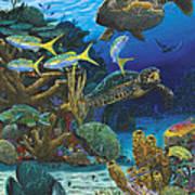 Cayman Turtles Re0010 Art Print