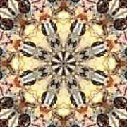 Cecropia Sun 5 Art Print