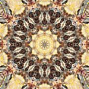 Cecropia Sun 3 Art Print