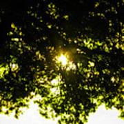 Cedar Filtered Sun Art Print