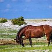 Cedar Island Wild Mustangs 59 Art Print