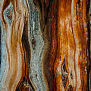 Cedar Texture Art Print
