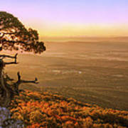 Cedar Tree Atop Mt. Magazine - Arkansas - Autumn Art Print