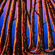 Cedars In Stanley Park Art Print