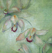 Celadon Cymbidiums Art Print by Susan Hanlon