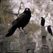 Cemetery Crows Art Print