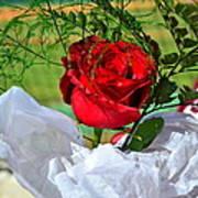 Centenary Rose Art Print