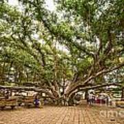 Central Court - Banyan Tree Park In Maui. Art Print