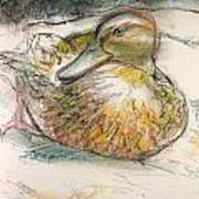 Central Park Duck On The Rocks Art Print