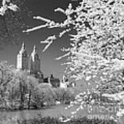 Central Park - Nyc Art Print