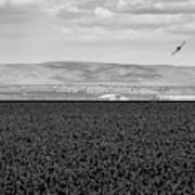 Central Washington, Usa. A Crop Duster Art Print