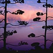 Century Sunset Art Print
