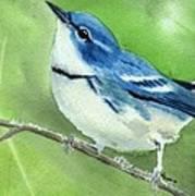 Cerulean Warbler Art Print