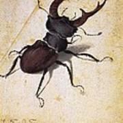 Cervus Lucanus Art Print