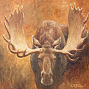 Bull Moose - Challenge Art Print by Crista Forest