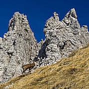 chamois in Alps Art Print