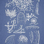 Champia Parvula Art Print by Aged Pixel