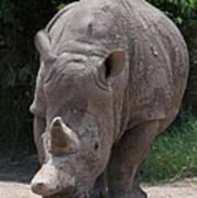 Waco Texas Rhinoceros Art Print