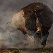Charging Bison Art Print by Daniel Eskridge
