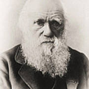 Charles Darwin Art Print by English School
