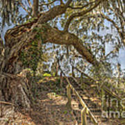 Charleston Oak Stairway Art Print