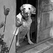 Charleston Shop Dog In Black And White Art Print