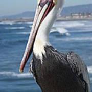 Charlie The Pelican Art Print