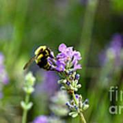 Chasing Nectar Art Print