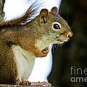 Chatty Squirrel Art Print