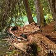 Cheakamus Lake Shoreline Art Print