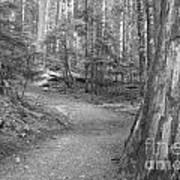 Cheakamus Trail In Black And White Art Print