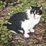 Checkers The Cat Art Print
